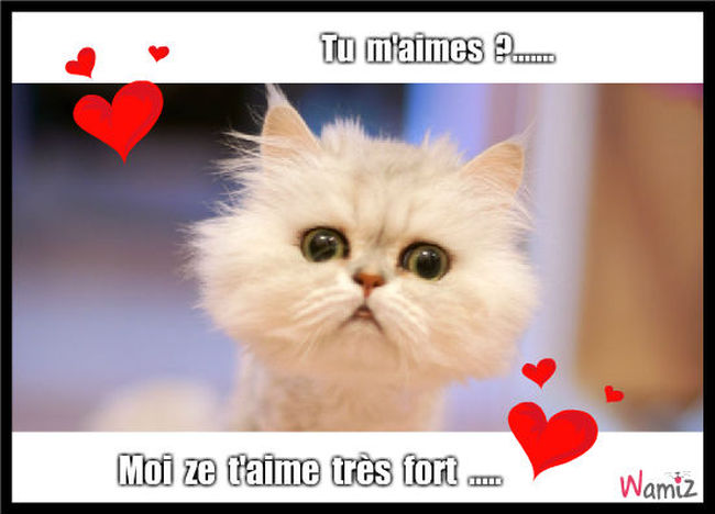 Tu m'aime ?, lolcats réalisé sur Wamiz