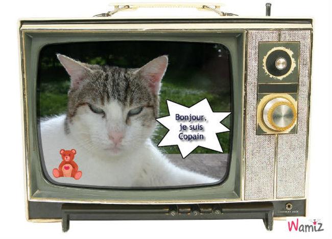 TV Copain, lolcats réalisé sur Wamiz