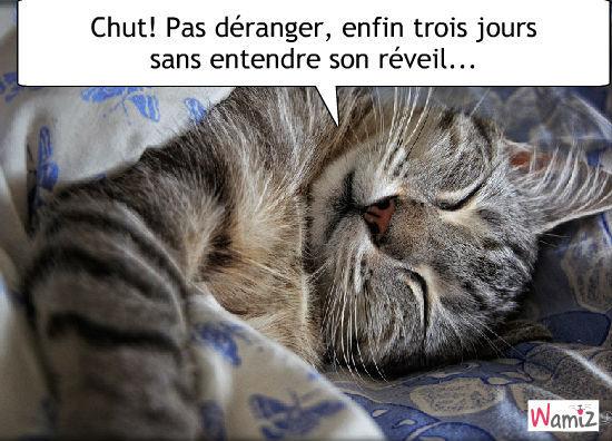 """Résultat de recherche d'images pour """"bon week end humour chat"""""""