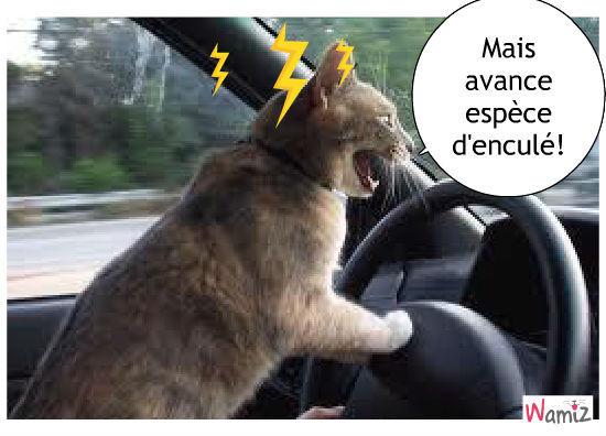 [Jeu] Association d'images - Page 4 Un-chat-sur-l-autoroute-59494