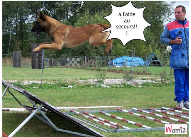 un chien qiu a peur de sauter, lolcats réalisé sur Wamiz