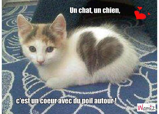 Chat ou chien tooniz bande dessin e bd et photo - Enlever les puces sur un chaton ...