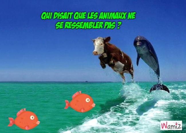 un dauphin et une vache ?? (fack), lolcats réalisé sur Wamiz