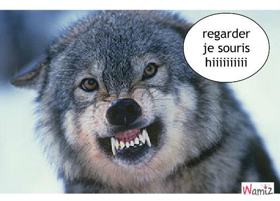 Le loup  Image drôle  Animaux
