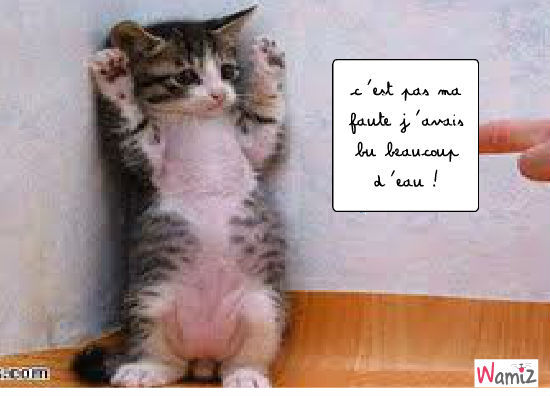 Relativ Photo Collection Chaton Mignon Et Drole XD79