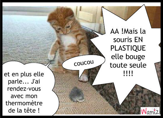 Chat rencontre chaton