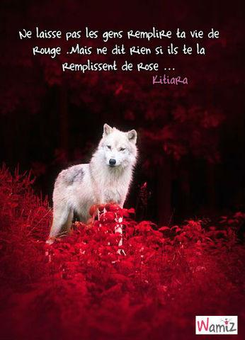 Vie de loup , lolcats réalisé sur Wamiz