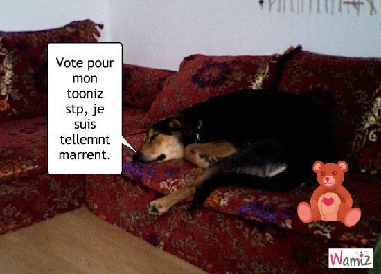 Vote pour moi stp!!!, lolcats réalisé sur Wamiz