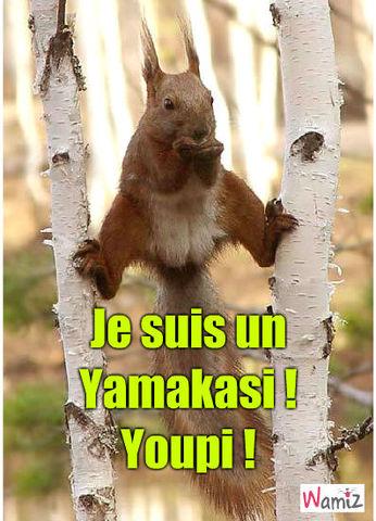 Yamakasi !, lolcats réalisé sur Wamiz