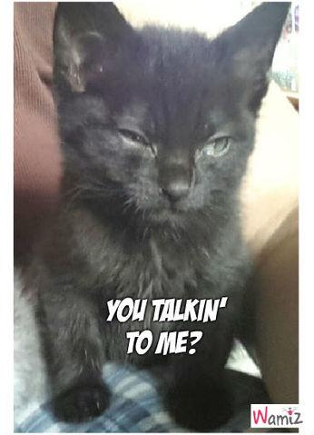 « You talkin' to me? », lolcats réalisé sur Wamiz