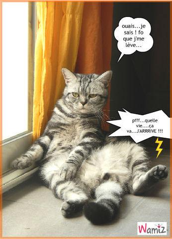 zen attitude : tooniz, bande dessinée (BD) et photo personnalisée d'animaux ! - Wamiz