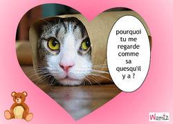 Filou11170 ma tre de filou chien wamiz - Images de chats rigolos ...