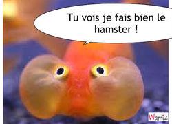 Une Ruche Sharks Poisson-hamster-51143
