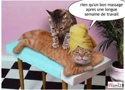 un bon massage tooniz lolcats r alis sur wamiz. Black Bedroom Furniture Sets. Home Design Ideas