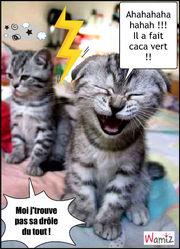 Un chaton fait caca vert tooniz lolcats r alis sur wamiz - Chat fait pipi sur le lit ...