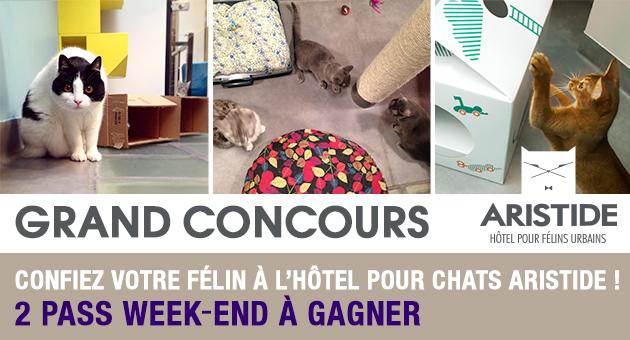 concours gagnez un s jour pour votre chat l 39 h tel aristide wamiz. Black Bedroom Furniture Sets. Home Design Ideas
