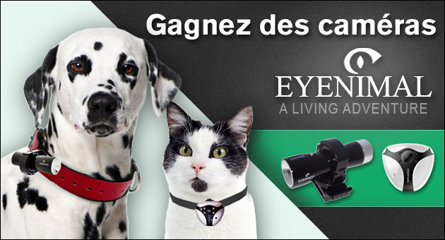 gagnez des cam ras eyenimal pour votre chien ou votre chat wamiz. Black Bedroom Furniture Sets. Home Design Ideas