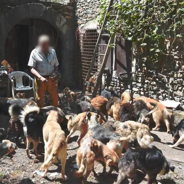 Grand amoureux des chiens, il en accueille 47 : quand les bénévoles interviennent chez lui, ils sont choqués...