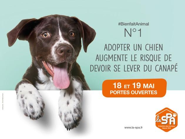 18 et 19 mai : Venez rencontrer votre futur animal de compagnie aux portes ouvertes de la SPA !