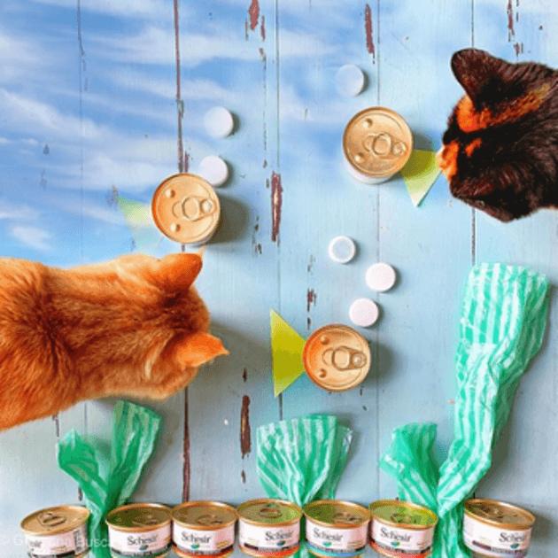 Comment éviter la lassitude alimentaire chez le chat ?