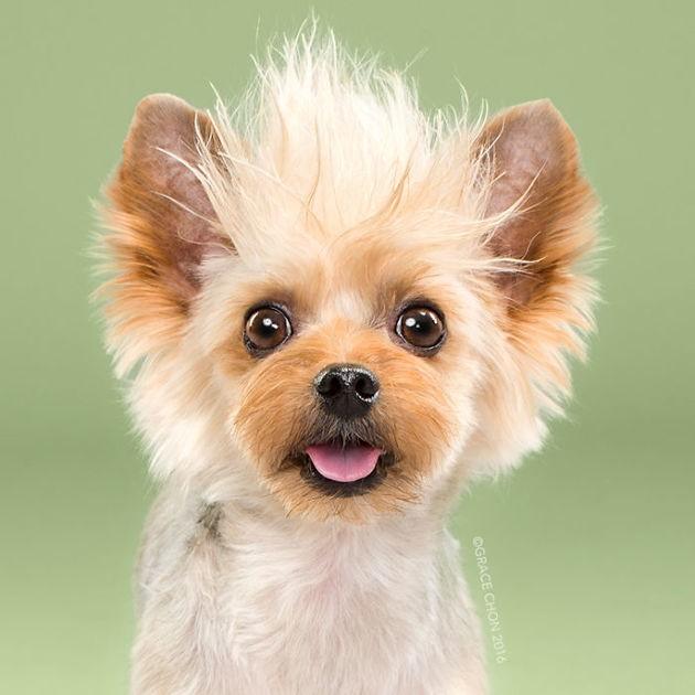 Déconfinement : 10 photos de chiens métamorphosés par une séance de toilettage bien attendue !