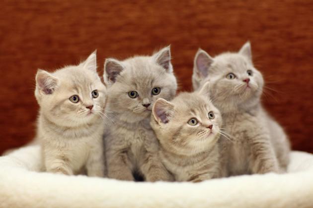 Selon la science, les chats pourraient savoir compter mais pas les chiens