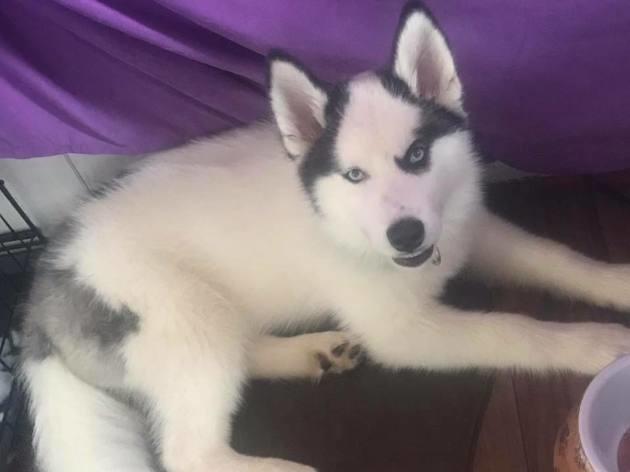 Photo postée par Kristin sur une page Facebook pour retrouver son chien
