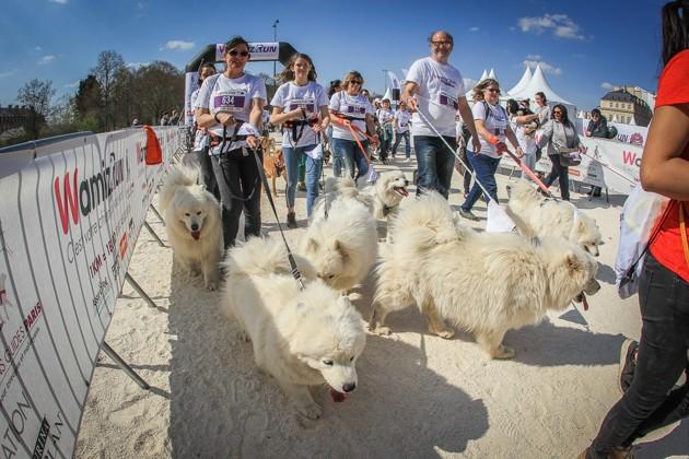 Wamiz Run 2020 : c'est votre chien qui vous sort le dimanche 29 mars au bois de Vincennes !