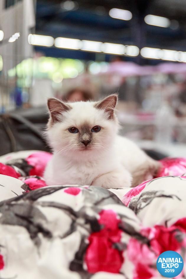 Salon Animal Expo & Animalis 2020 : rendez-vous le 3 et 4 octobre pour chouchouter votre animal comme il se doit !