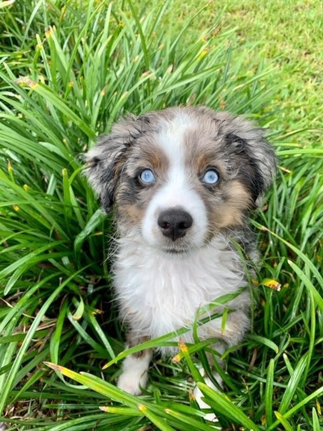Concours du plus beau chien adopté : votez pour faire gagner un an de croquettes à un chien de refuge !