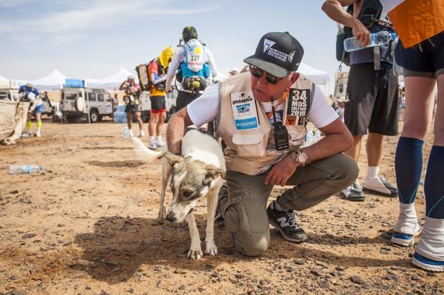 Ce chien court le Marathon des sables dans le désert marocain !