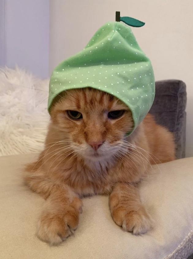 Urban Outfitters vend des couvre-chefs... pour chats !