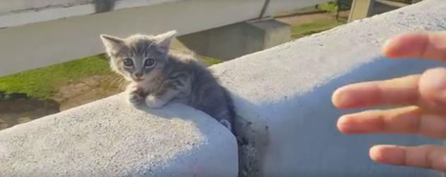 Le sauvetage du chaton