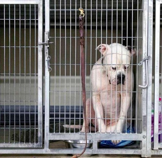 Le chien dans le refuge