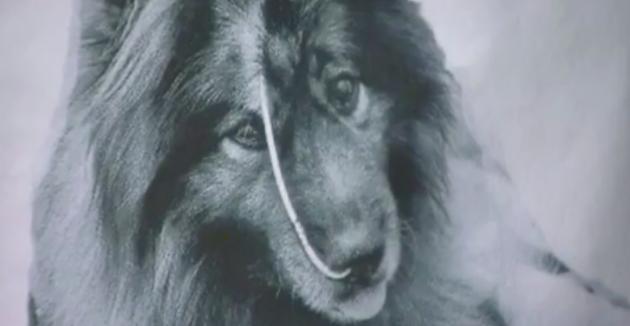 Photo du chien sous traitement