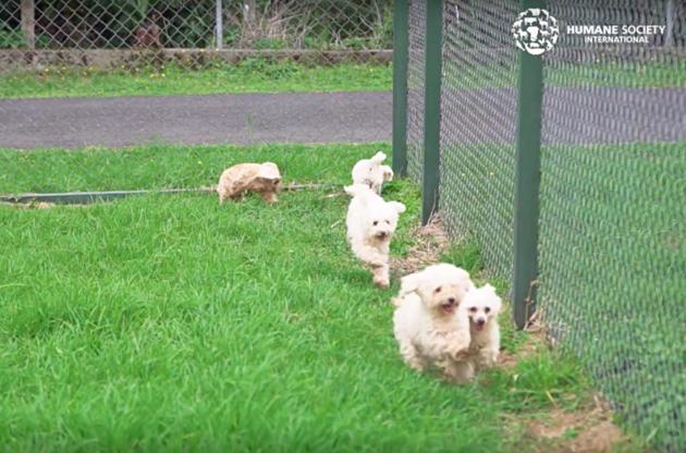 Les chiens découvrent la liberté