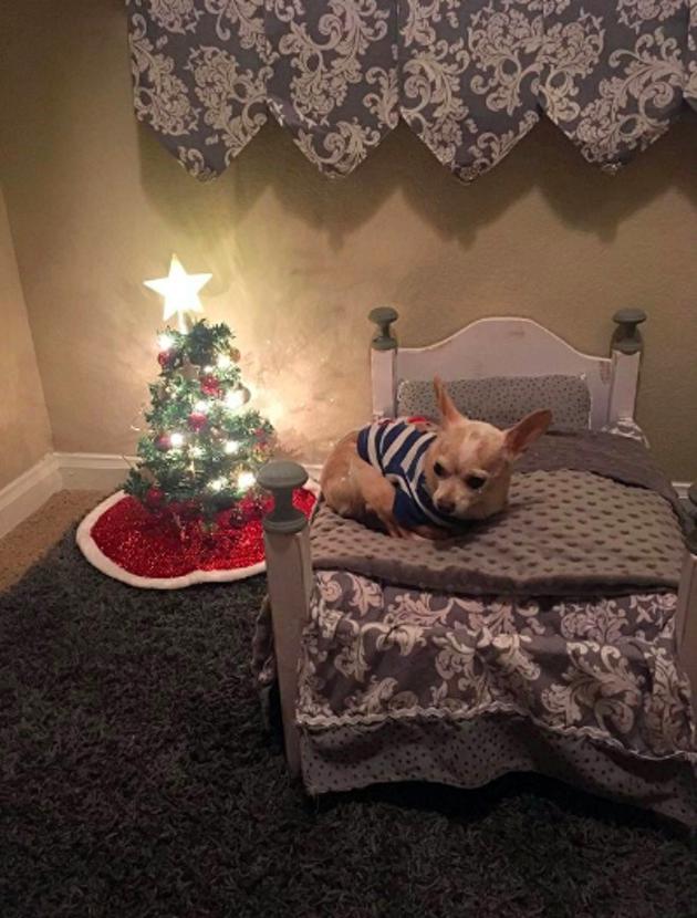 A Noël, il a même droit à un joli sapin