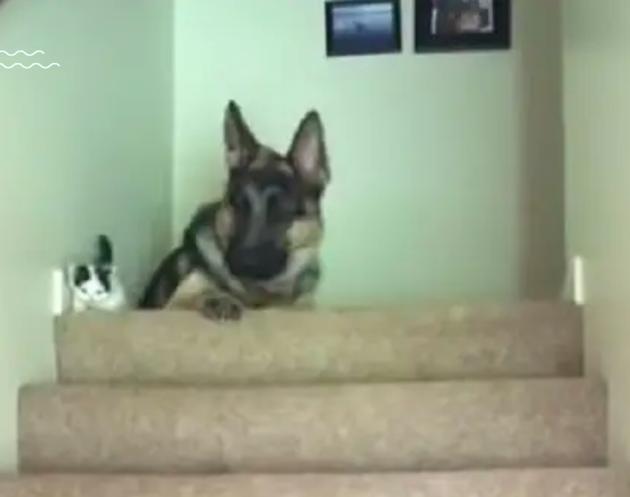 Chien et chaton s'allongent ensuite en haut des marches
