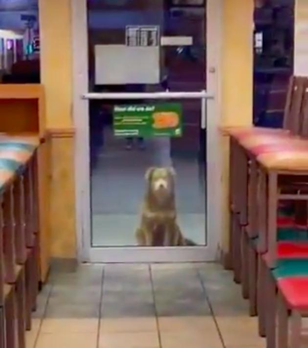 Le chien attend sagement devant Subway