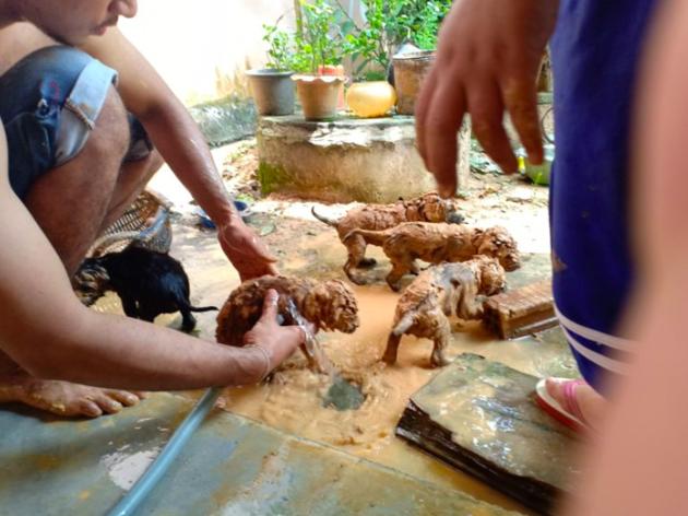 Le nettoyage des chiots