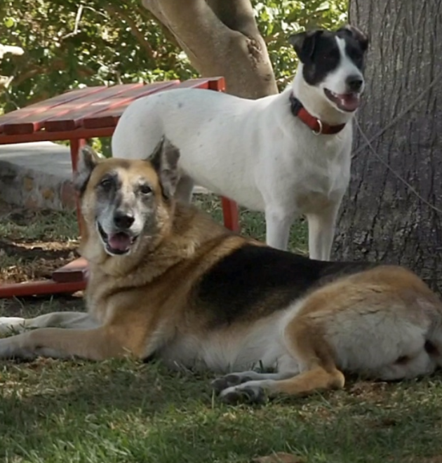 Roxy a même un nouvel ami