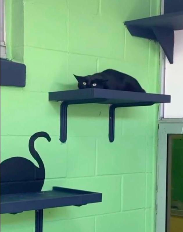 Le chat se camoufle au maximum