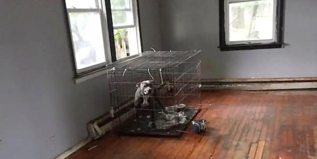 Voici la cage dans laquelle l'un des chiens était enfermé