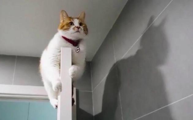 Le chat révèle qu'il est Batman en grimpant par-dessus la porte