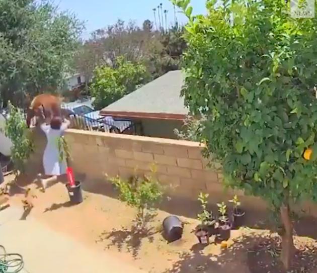 L'adolescente court et repousse l'ours de l'autre côté du muret