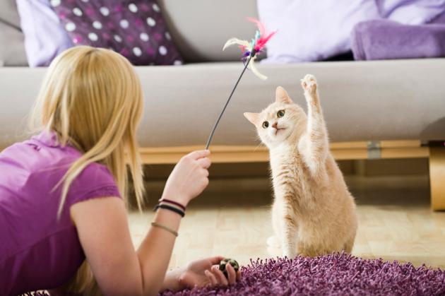 Plus d'activités et une nourriture plus protéinée inciteraient les chats à moins chasser (vidéo)