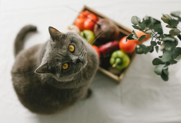 Quels sont les aliments pour humains que mon chat peut manger ?