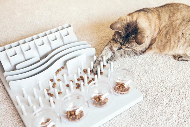 Mon chat s'ennuie, a du surpoids ou mange trop vite. La gamelle éducative est LA solution !
