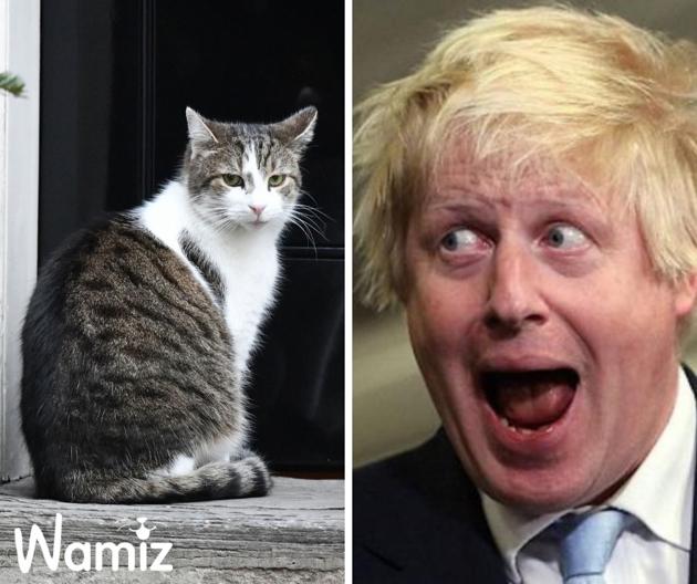 Boris Johnson : le nouveau Premier ministre du Royaume-Uni va hériter de Larry le chat