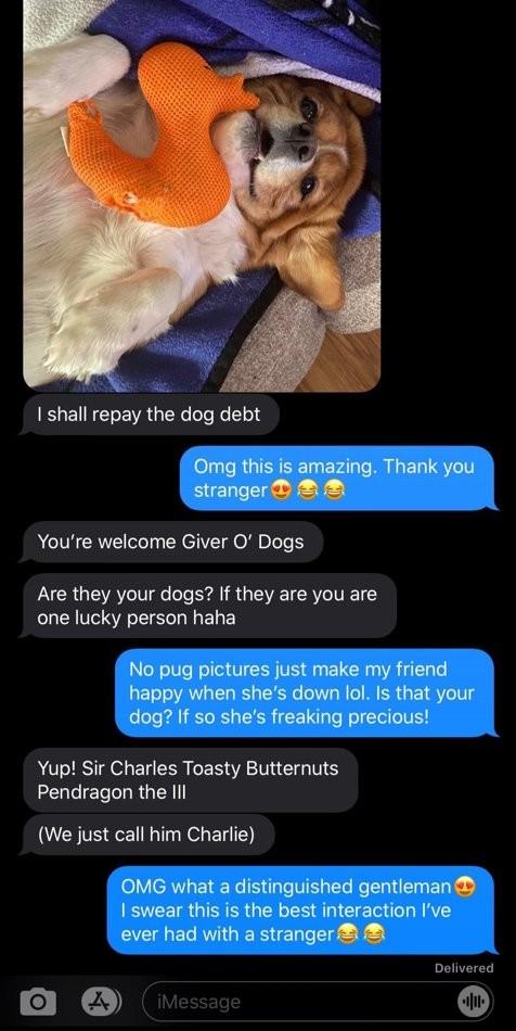 En envoyant des photos de Carlins à une amie, elle se trompe de destinataire : la suite la ravit plus que tout !
